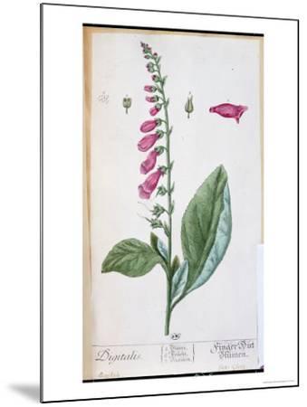 "Digitalis Purpurea, from ""Herbarium Blackwellianum,"" 1757-Elizabeth Blackwell-Mounted Giclee Print"