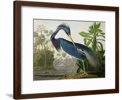 "Louisiana Heron from ""Birds of America""-John James Audubon-Framed Giclee Print"