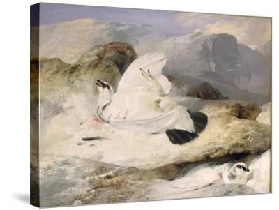 Ptarmigan-Edwin Henry Landseer-Stretched Canvas Print