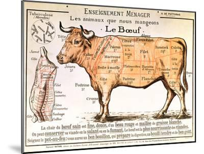 Beef: Diagram Depicting the Different Cuts of Meat--Mounted Premium Giclee Print