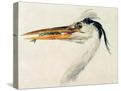 Heron with a Fish-J^ M^ W^ Turner-Stretched Canvas Print