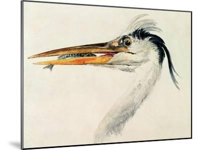 Heron with a Fish-J^ M^ W^ Turner-Mounted Giclee Print
