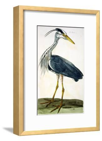 """The Heron Plate from """"The British Zoology Class II: Birds""""-Peter Paillou-Framed Giclee Print"""
