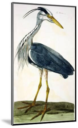 """The Heron Plate from """"The British Zoology Class II: Birds""""-Peter Paillou-Mounted Giclee Print"""