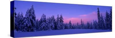 Forest in Winter, Dalarna, Sweden--Stretched Canvas Print