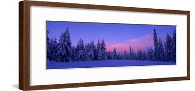 Forest in Winter, Dalarna, Sweden--Framed Photographic Print