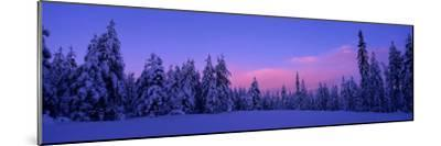 Forest in Winter, Dalarna, Sweden--Mounted Photographic Print