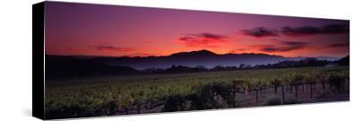 Vineyard at Sunset, Napa Valley, California, USA--Stretched Canvas Print
