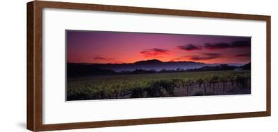 Vineyard at Sunset, Napa Valley, California, USA--Framed Photographic Print