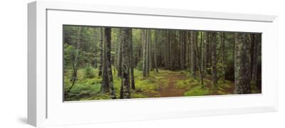 Lush Forest, Acadia National Park, Maine--Framed Photographic Print