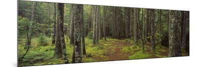 Lush Forest, Acadia National Park, Maine--Mounted Photographic Print