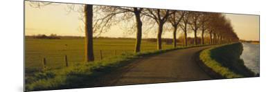 Winding Road, Trees, Oudendijk, Netherlands--Mounted Photographic Print