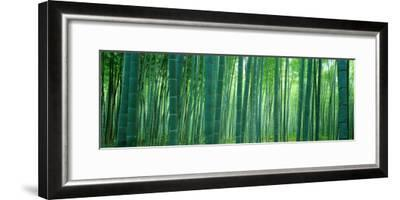 Bamboo Forest, Sagano, Kyoto, Japan--Framed Photographic Print
