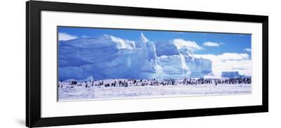 Emperor Penguin Colony, Ruser-Larsen Ice Shelf, Weddell Sea, Antarctica  Photographic Print by   Art com