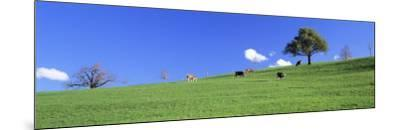 Cows, Canton Zug, Switzerland--Mounted Photographic Print