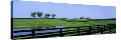 Horse Farm, Kentucky, USA--Stretched Canvas Print