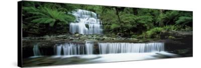 Liffey Falls, Tasmania, Australia--Stretched Canvas Print