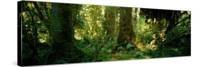 Hoh Rain Forest, Olympic National Park, Washington State, USA--Stretched Canvas Print