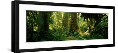 Hoh Rain Forest, Olympic National Park, Washington State, USA--Framed Photographic Print