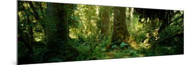 Hoh Rain Forest, Olympic National Park, Washington State, USA--Mounted Photographic Print