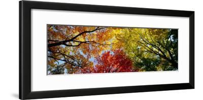 Colorful Trees in Fall, Autumn, Low Angle View--Framed Premium Photographic Print