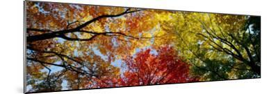 Colorful Trees in Fall, Autumn, Low Angle View--Mounted Premium Photographic Print