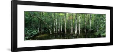 Big Cypress Nature Preserve, Florida, USA--Framed Photographic Print