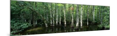 Big Cypress Nature Preserve, Florida, USA--Mounted Photographic Print