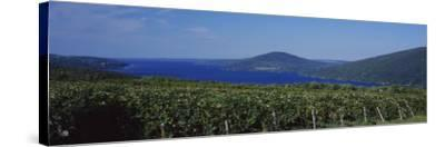 Vineyards Near a Lake, Canandaigua Lake, Finger Lakes, New York State, USA--Stretched Canvas Print