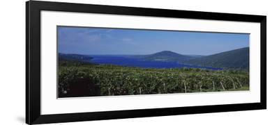 Vineyards Near a Lake, Canandaigua Lake, Finger Lakes, New York State, USA--Framed Photographic Print