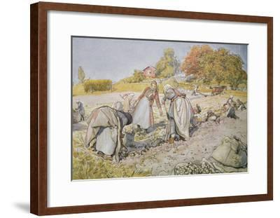 Digging Potatoes, 1905-Carl Larsson-Framed Giclee Print