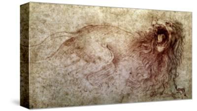 Sketch of a Roaring Lion-Leonardo da Vinci-Stretched Canvas Print