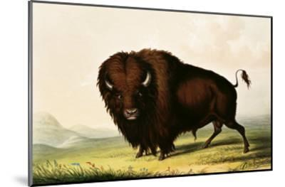 A Bison, circa 1832-George Catlin-Mounted Giclee Print