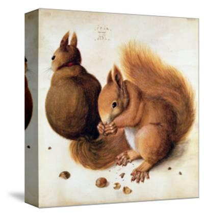 Squirrels, 1512-Albrecht D?rer-Stretched Canvas Print