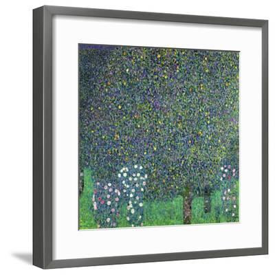 Roses Under the Trees, circa 1905-Gustav Klimt-Framed Giclee Print