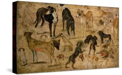 Study of Hounds, 1616-Jan Brueghel the Elder-Stretched Canvas Print