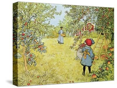 The Apple Harvest-Carl Larsson-Stretched Canvas Print