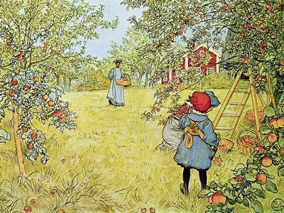 The Apple Harvest-Carl Larsson-Premium Giclee Print