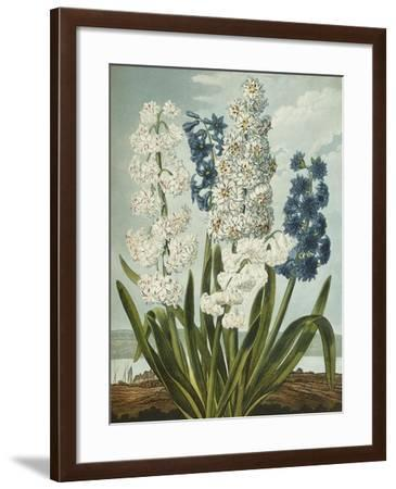 Hyacynths-Robert John Thornton-Framed Giclee Print