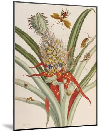 Pineapple (Ananas) with Surinam Insects-Maria Sibylla Merian-Mounted Giclee Print