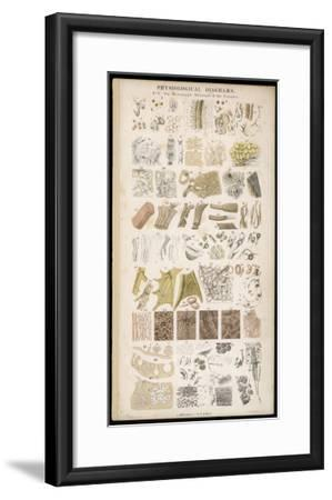 Microscopic Structure of the Texture of Various Parts of the Body-J.s. Cuthbert-Framed Giclee Print