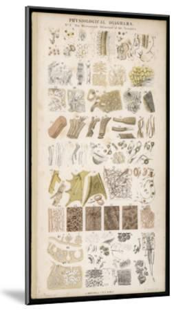 Microscopic Structure of the Texture of Various Parts of the Body-J.s. Cuthbert-Mounted Giclee Print