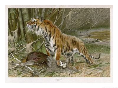 Tiger and Its Freshly Killed Prey a Deer in This Case-Wilhelm Kuhnert-Framed Giclee Print