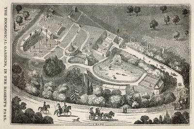 Regent's Park London: a Bird's Eye View of the Gardens of the Zoological Society-I. Dodd-Stretched Canvas Print