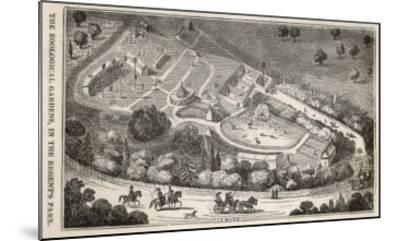 Regent's Park London: a Bird's Eye View of the Gardens of the Zoological Society-I. Dodd-Mounted Giclee Print