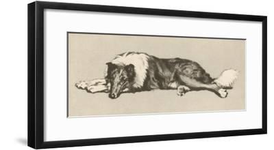 Collie Dog Relaxes-Cecil Aldin-Framed Giclee Print