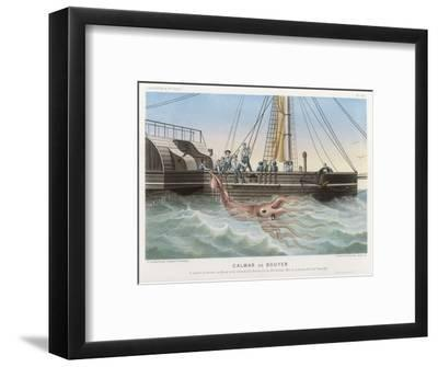 "Calmar de Bouyer Giant Squid Caught by the French Vessel ""Alecto"" off Tenerife Canary Islands-E. Rodolphe-Framed Giclee Print"