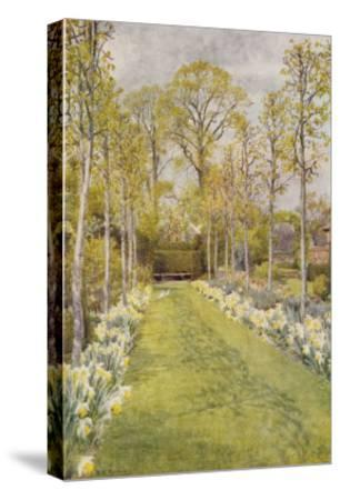 Looking Down a Grass Path with a Bed of Daffodils and Trees on Either Side-Beatrice Parsons-Stretched Canvas Print