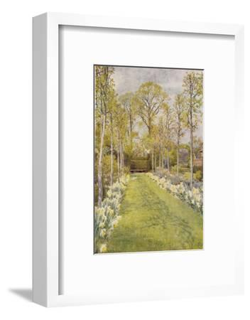 Looking Down a Grass Path with a Bed of Daffodils and Trees on Either Side-Beatrice Parsons-Framed Giclee Print