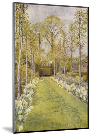 Looking Down a Grass Path with a Bed of Daffodils and Trees on Either Side-Beatrice Parsons-Mounted Giclee Print
